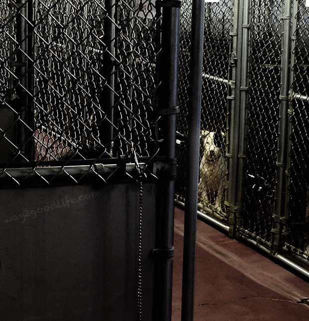 Kays-Animal-Shelter-waiting