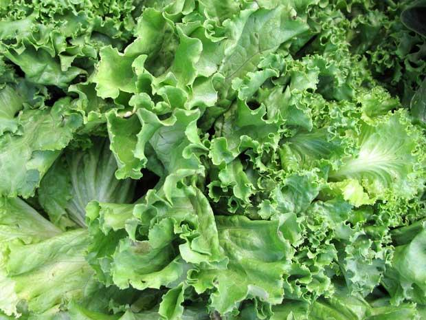 fresh-lettuce-kale