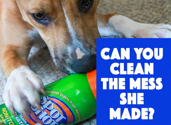 How Do You Clean Up Dog Urine On Carpet