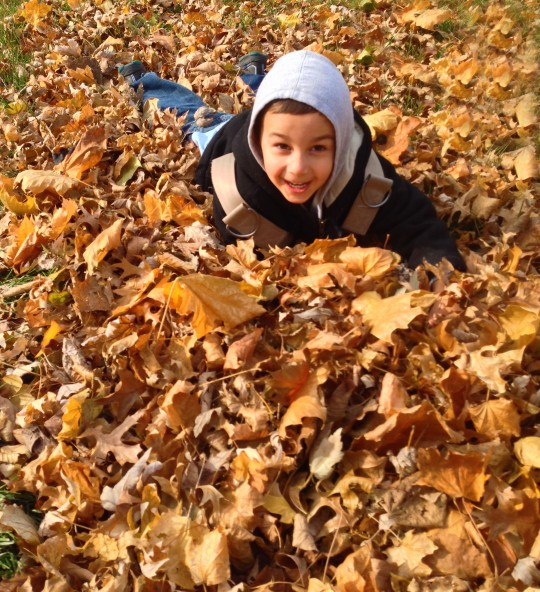 boy in harness fell in the pile of leaves
