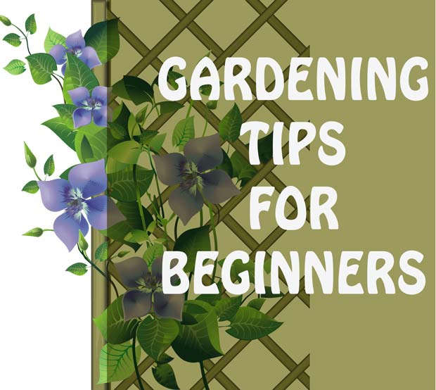 Gardening Tips for Beginners, because you know you want to finally start a garden this year