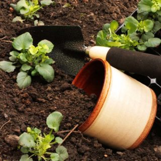 Local Friday: Small Space Gardening
