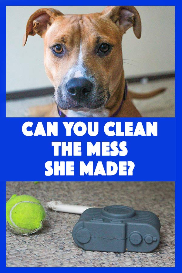 This dog knows how to make mess. Do you know how to clean it?