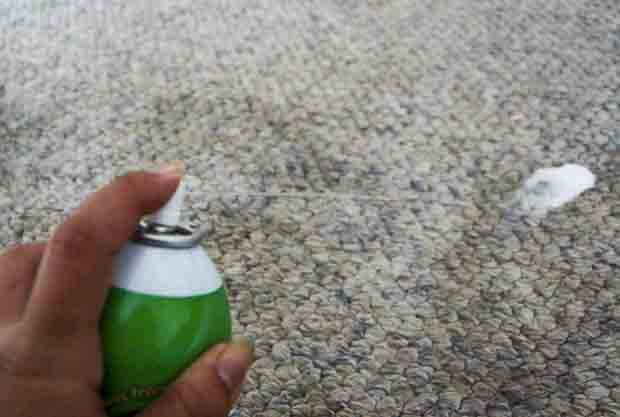 Carpet cleaning spray - Pet Friendly Carpet Cleaning Tips