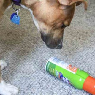 Dog and carpet cleaner