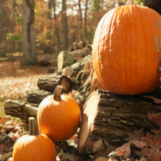 If you Don't do These Inventive Fall Things Now, You Will Regret it in Winter