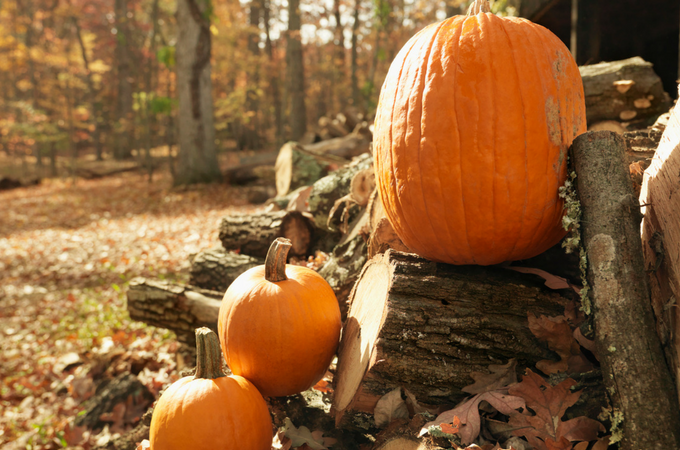 Check out our Favorite Fall Activities to do as a Family! This list is full of great things to make the cooler weather fun for the whole family!