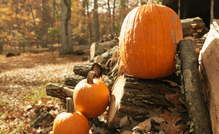 Check out our Favorite fall activities for kids to do as a Family! This list is full of great things to make the cooler weather fun for the whole family!