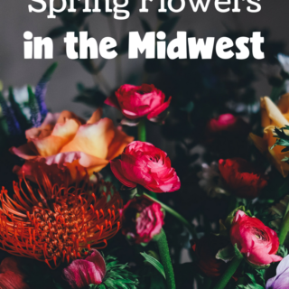 Don't miss this list of best places to see Spring flowers in the Midwest! Gorgeous flowers are just a few minutes away!