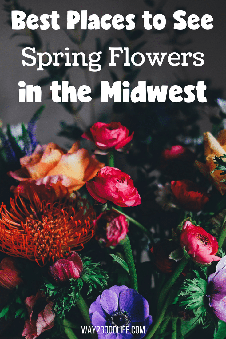 Don't miss this list of best places to see Spring flowers in the Midwest! Gorgeous flowers are just a few minutes away! #Way2GoodLife #spring #springflowers