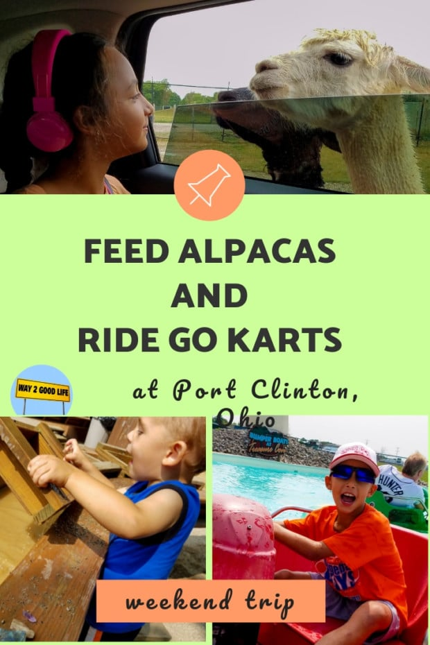 Feeds alpacas and ride go karts at Port clinton
