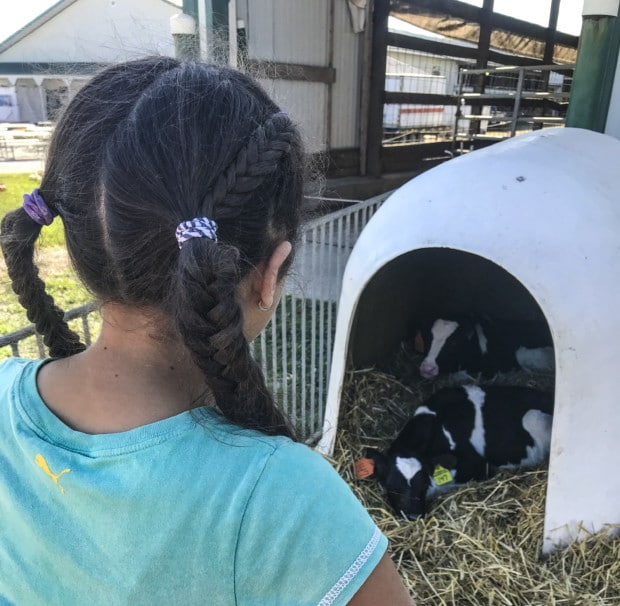 Girl watches baby cows at Kelsay Farm