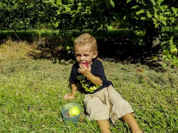 At Hendricks Orchard boy eats apple