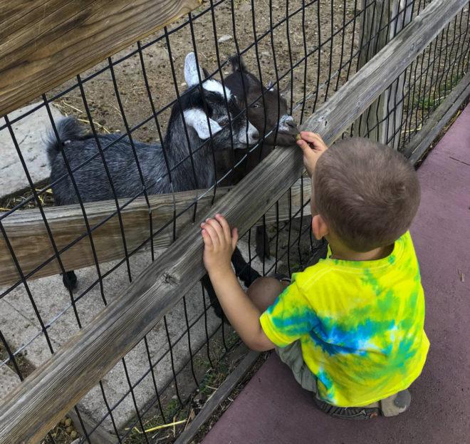 Boy feeds animals at Storybook Land Aberdeen South Dakota