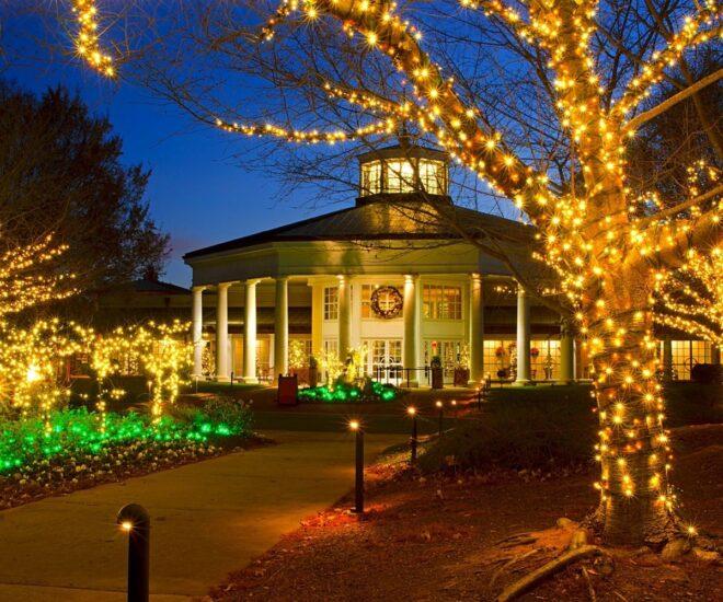 Holiday Christmas lights on tree and surrounding areas