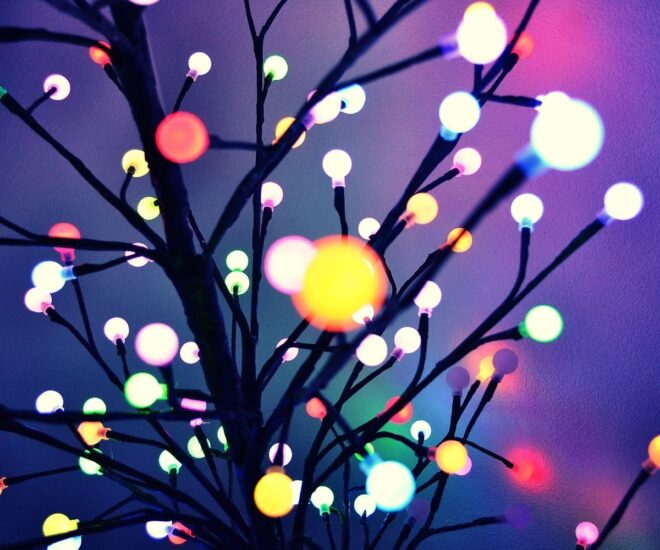 Holiday Christmas lights on tree branches