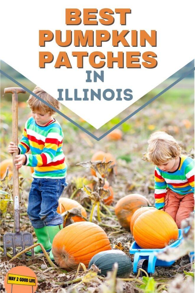 Best Pumpkin Patches in Illinois
