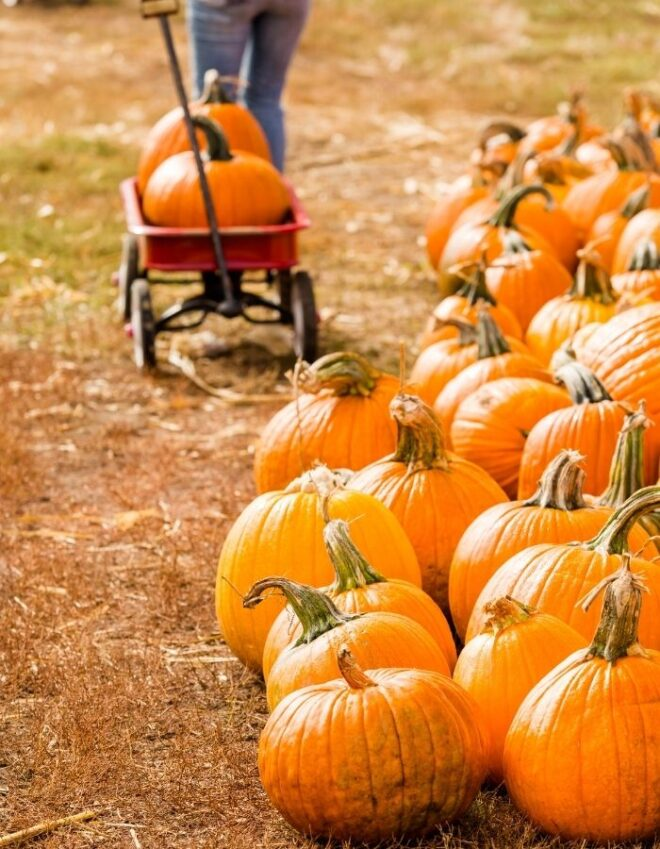a pumpkin on wagon and more around