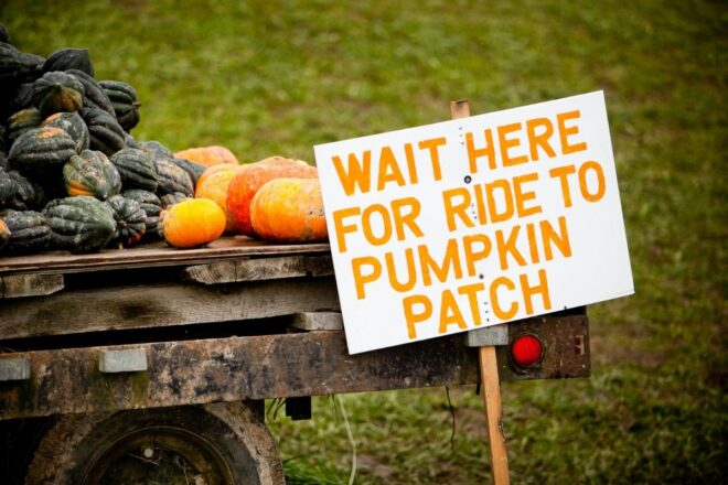 Wait here for tide to pumpkin patch